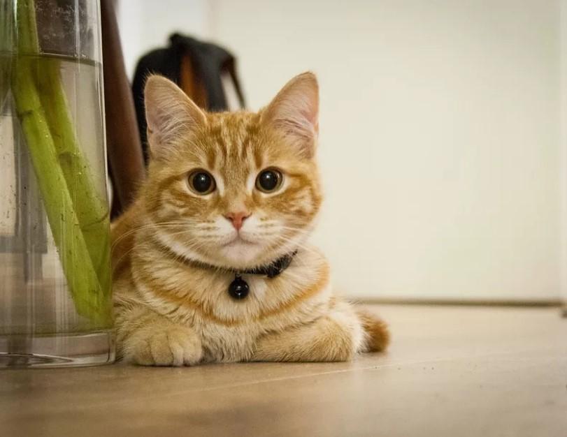 Причины, по которым кот должен жить в доме