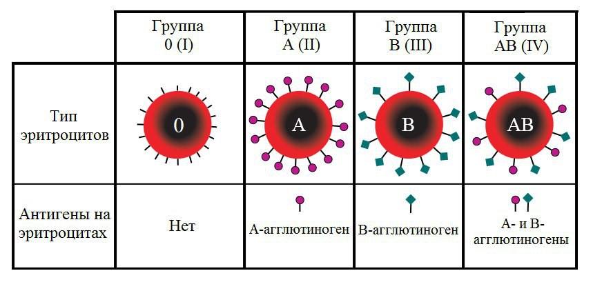 В чем различие групп крови