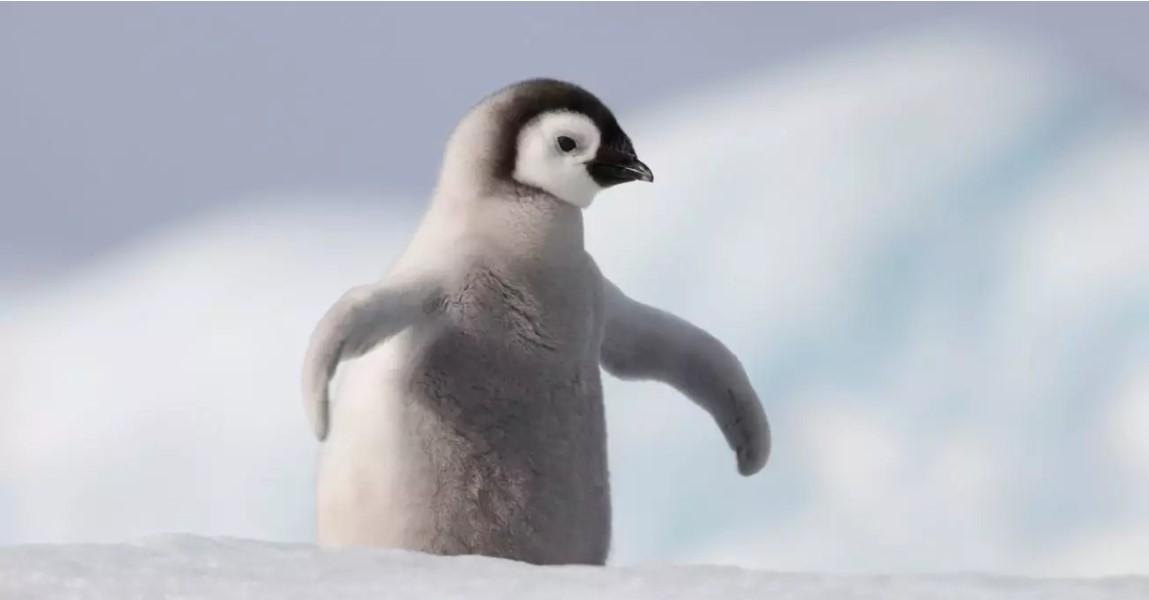 Почему пингвины намного хуже, чем вы думаете