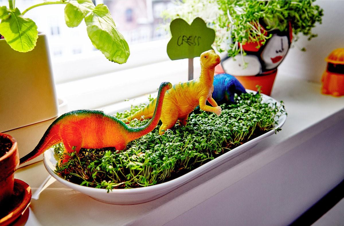 Безопасность и польза: растения для детской комнаты
