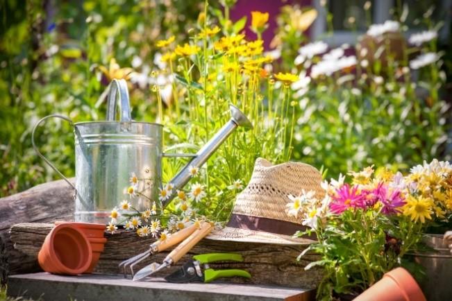 Народные средства, которые опасны для сада и огорода