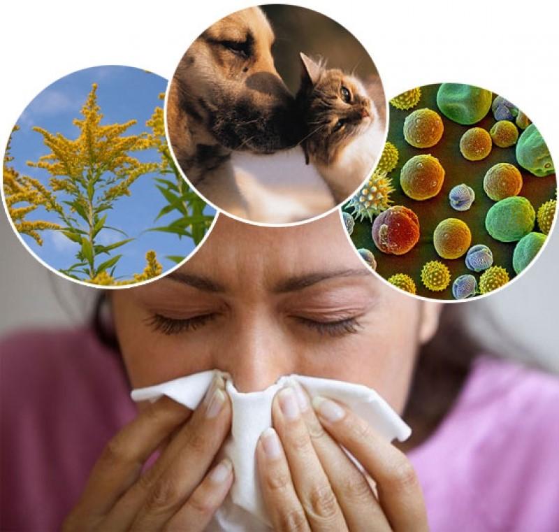Вездесущая аллергия: почему она возникает, даже если сидеть дома