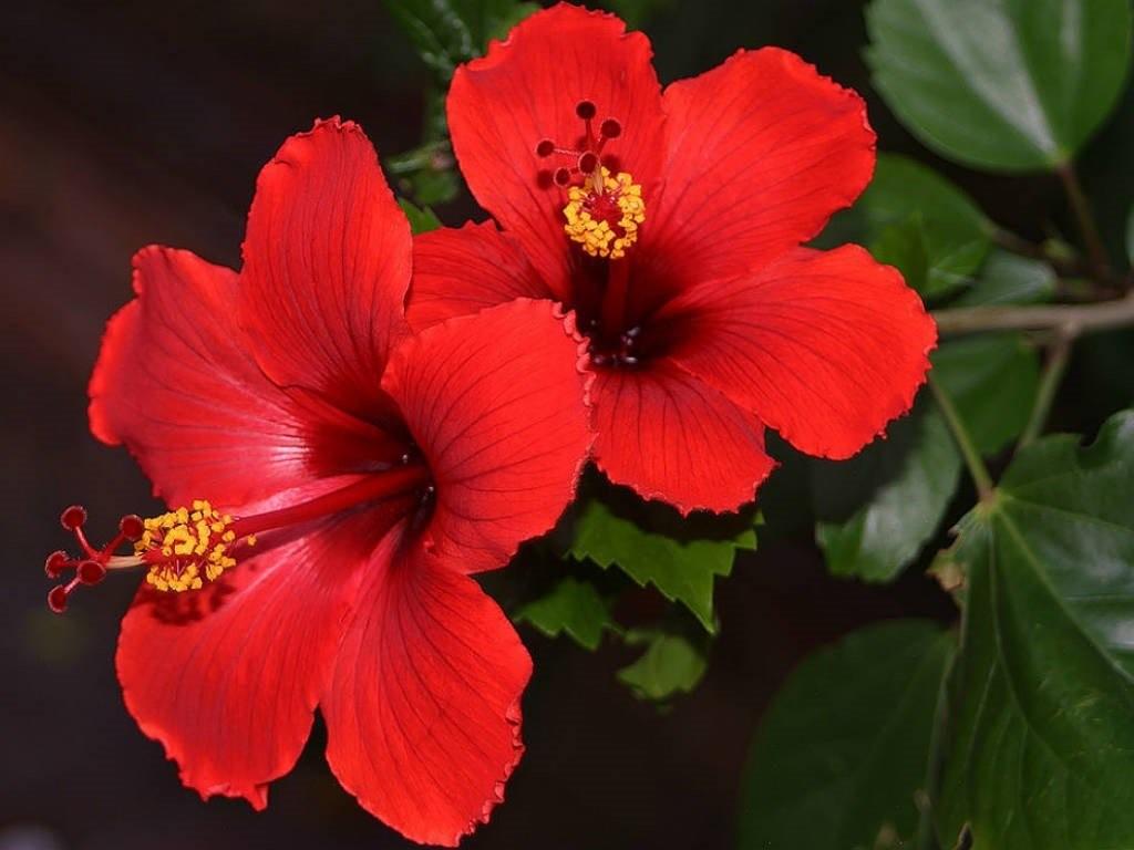 Какие растения помогут вам привлечь мужчину