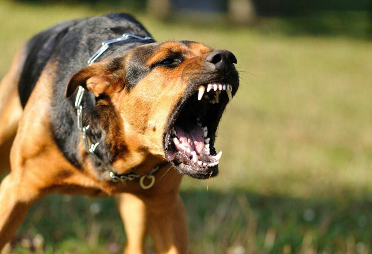 Что собака может рассказать хозяину о себе
