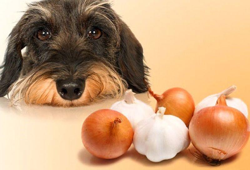 Топ продуктов, приносящих вред домашнему питомцу