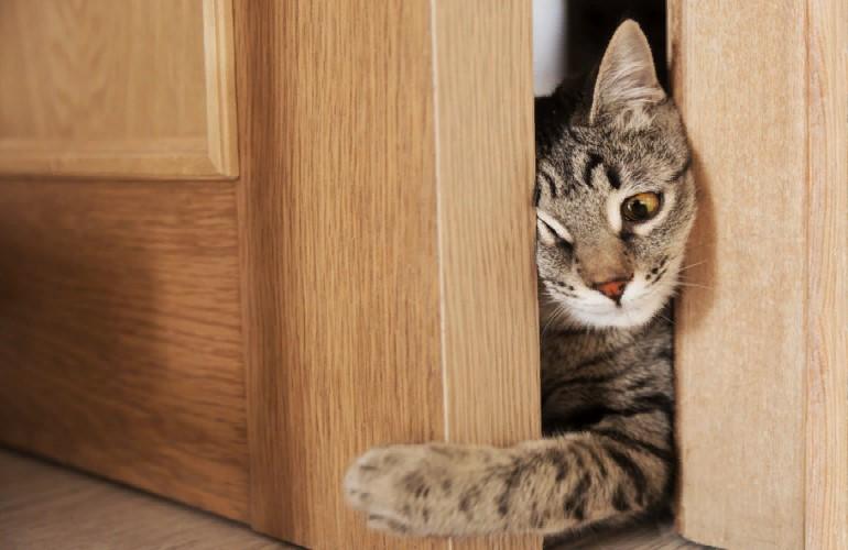 По каким причинам кошки уходят из дома