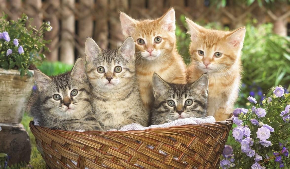 Изо рта кошки воняет тухлятиной: что делать и в чем проблема