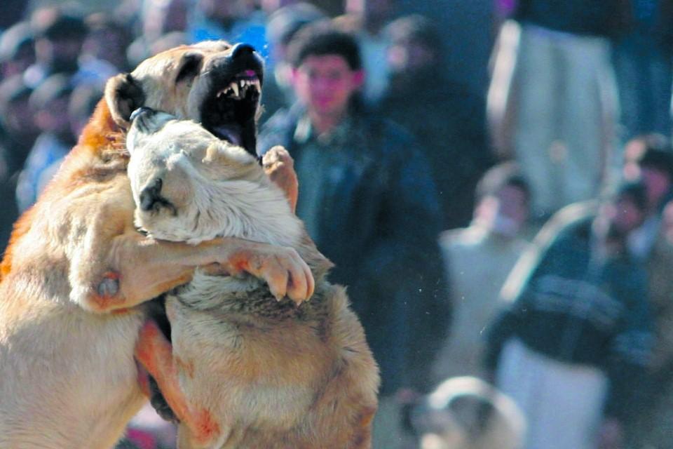 Топ-5 пород собак с мощной силой укуса