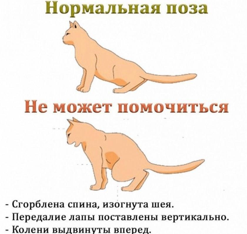Кошка гадит на кровать: приметы, причины