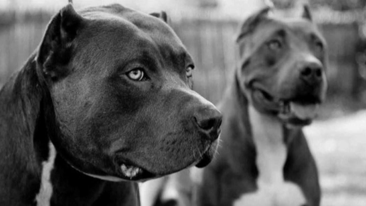 Пять преданных пород собак, которые не станут слушать другого человека