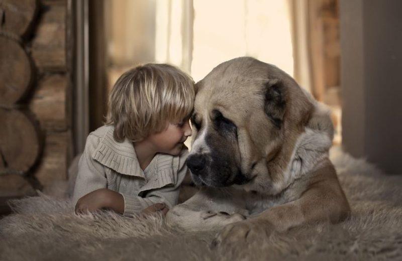 Домашнее животное как подарок ребенку: стоит или нет