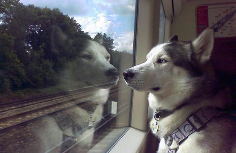 Особенности перевозки собак в поезде