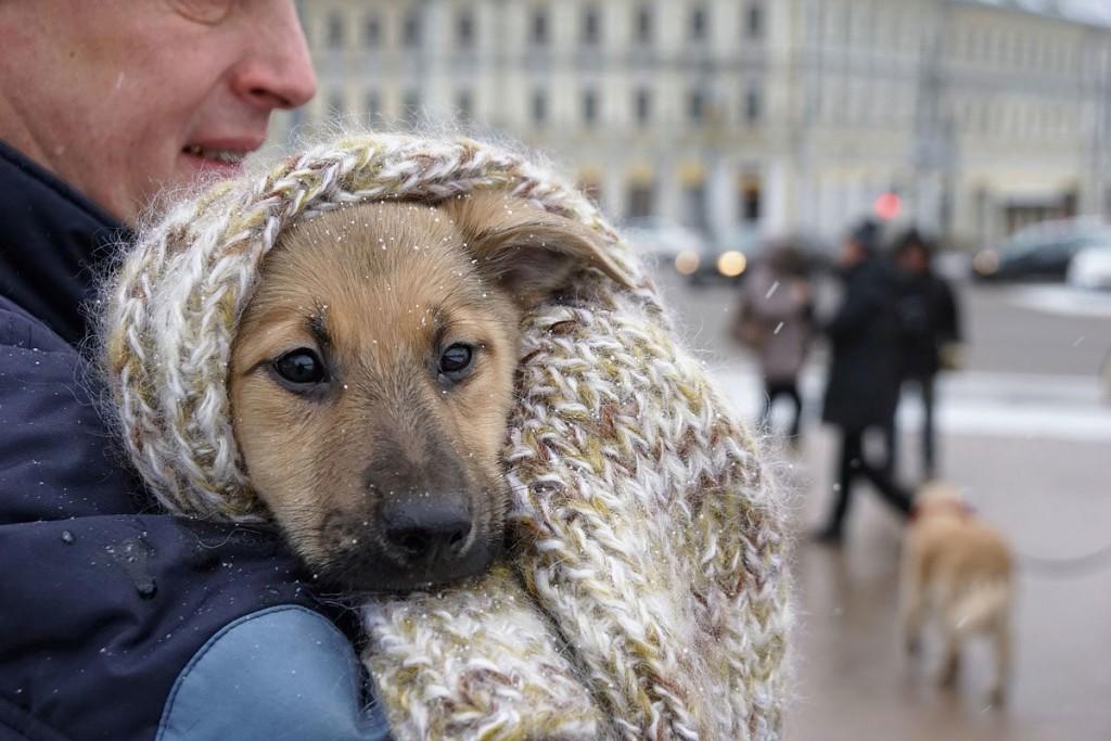 Что делать, если подобрали бездомного питомца