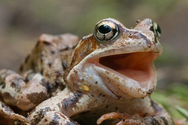 В чем заключается польза лягушек, ящериц и ежей на загородном участке
