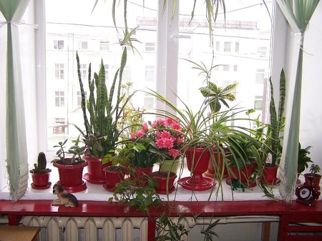 Какие растения лучше всего подойдут для подоконника в разных частях квартиры