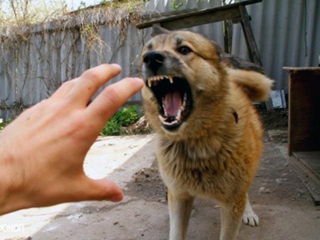 Собака укусила своего хозяина: как наказать ее так, чтобы она поняла урок