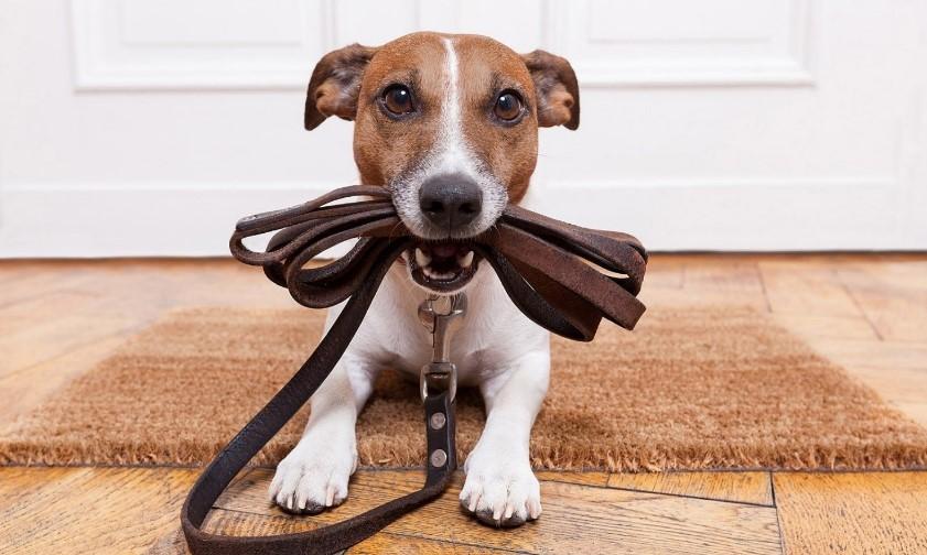 Законный выгул собак: куда можно и нельзя ходить с питомцами