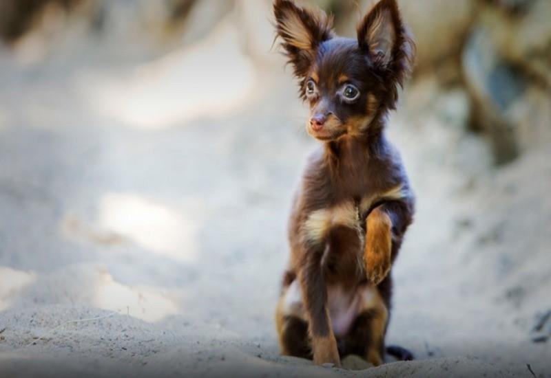 Умные и преданные собаки среди мелких, средних и крупных пород