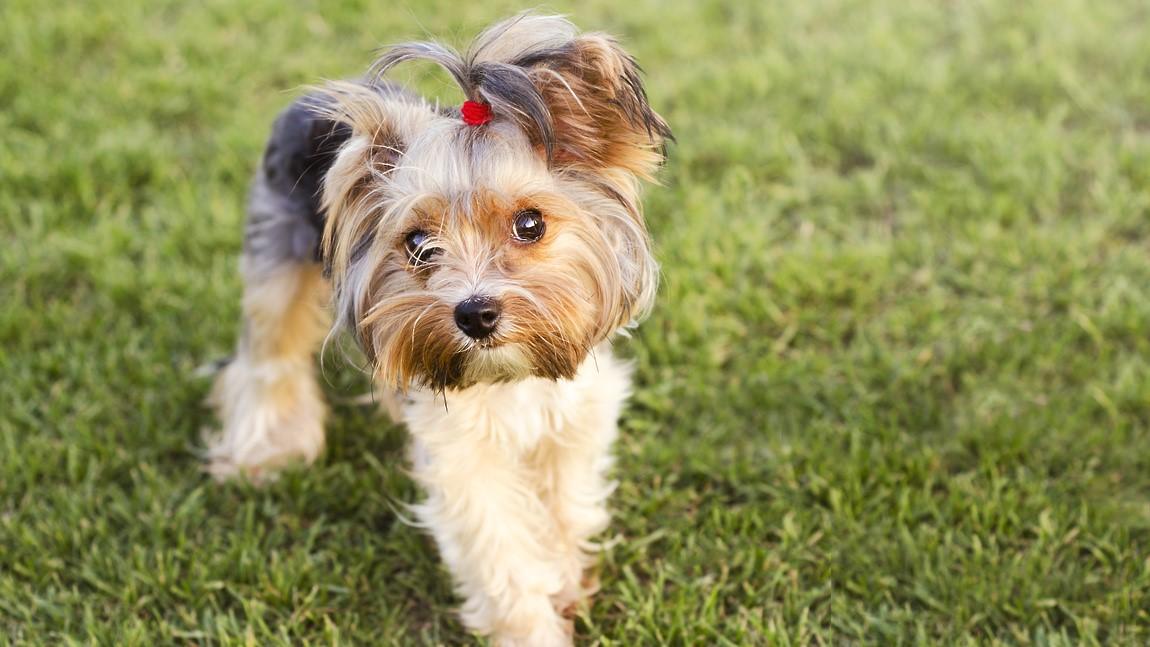 Почему собака часто линяет часто