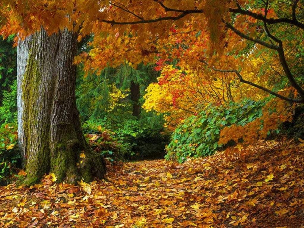 Почему осенью листья окрашиваются в другие цвета