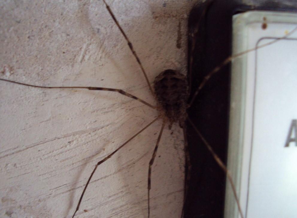 Основные причины, из-за которых в доме много пауков